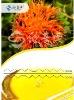 Conjugated linoleic acid CLA EE
