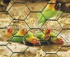 pvc chicken coop galvanized wire mesh