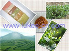 Green Tea P.E.(Plant Extract) Anti-aging