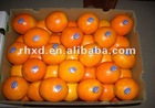 chinese fresh navel orange