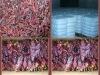 2012 crop sweet paprika