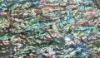 New Zealand natural abalone paua shell mosaic sheets