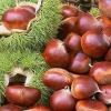2011 fresh half-dried chestnut