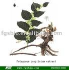 Polygonum cuspidatum extract (Resveratrol ) 25%,50%,98%,99%