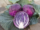Health Food Ingredient Plant Extract Red Cabbage Color