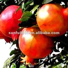 high quality Pomegranate extract 30% 40% punicalagin