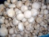 frozen button mushroom whole