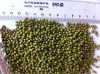 GREEN MUNG BEAN