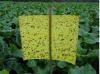 2012 Hot Sale strong adhesive fly trap,yellow board insect killer,fly ribbon ,flycatcher