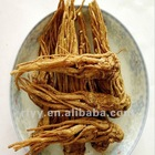 chinese angelica