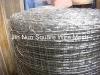 Hot Galvanized Square Wire Mesh