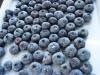 Long-term supply competitive price Frozen blueberry