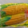 sweet corn cob in vacuum packaging