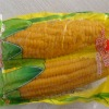 sweet corn cob in vacuum packaging