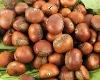 chestnut (620)