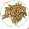 Chinese Goldthread Rhizome Extract