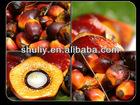 palm oil press machine 0086-15093262873