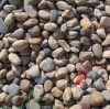 Colorful pebble stone