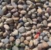 Colorful pebble stone