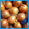 2012 New Fresh Yellow Onion