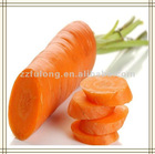 2012 Fresh Carrot-EU Standards