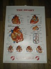 human heart 3d chart/medical wall chart/3d medical poster