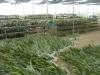 Delong Farm