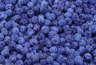 Bilberry Extract