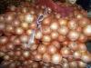onions fresh