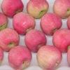 China fruit fuji apple export