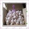 2011 fresh chinese normal white garlic
