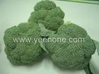2011 new Fresh Broccoli