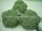 2011 new Fresh Broccoli