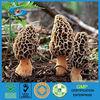 100% Natural Wild Morel Mushroom