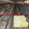 paper egg tray factory
