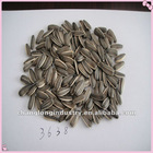 2012 new type striped sunflower seeds 3638