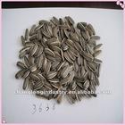 2012 new type striped sunflower seeds 3638