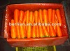 Wholesale 2012 new crop chinese red carrot