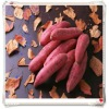 Natural Pigment Purple Sweet Potato Extract