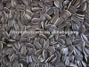 Round Shape Sunflower Seeds