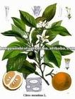 Diosmin 95% HPLC EP6 Citrus anrantium extract