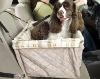 Pet car front carrier