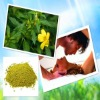Damiana Extract With Factory Direct Price