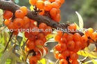 100% pure sea buckthorn oil