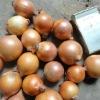 4-6cm Fresh Yellow Onion