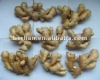 New china yellow color fresh wholesale ginger finger
