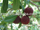 Chinese red bayberry