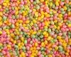 bulk jelly beans brands