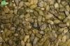 Snow White Pumpkin Seeds Kernel grade A/ AA 2012crop