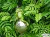 Stainless steel frog ball garden item